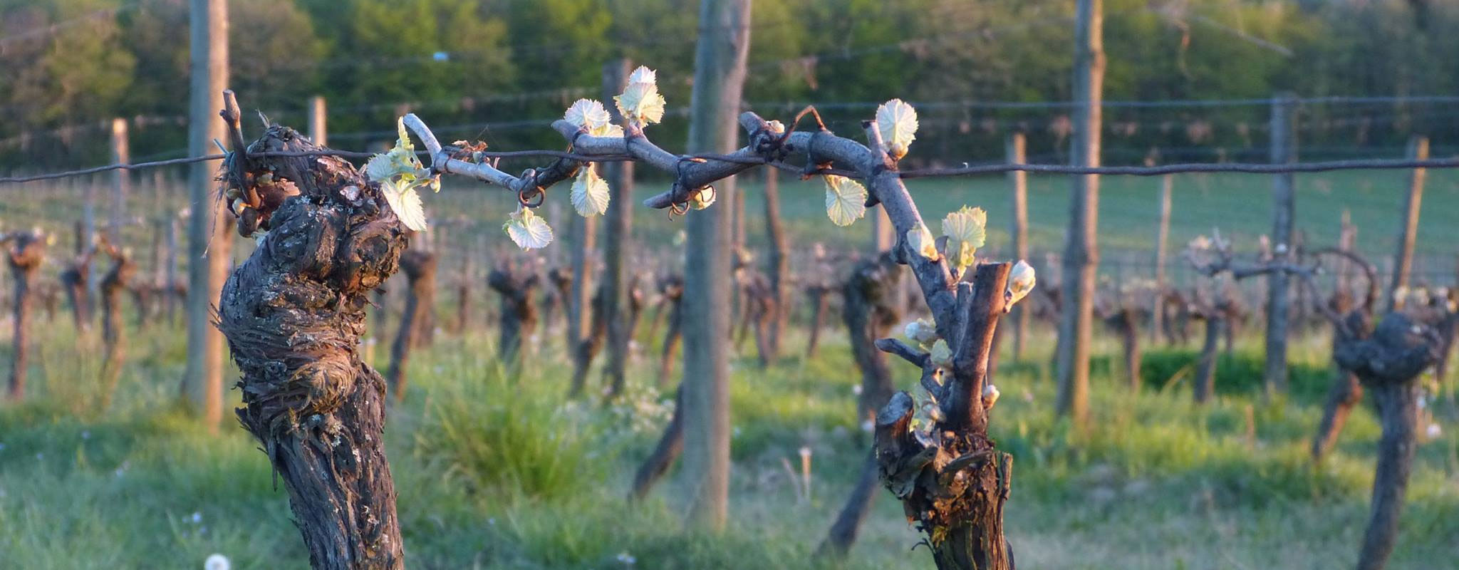 Le printemps au domaine Pajot
